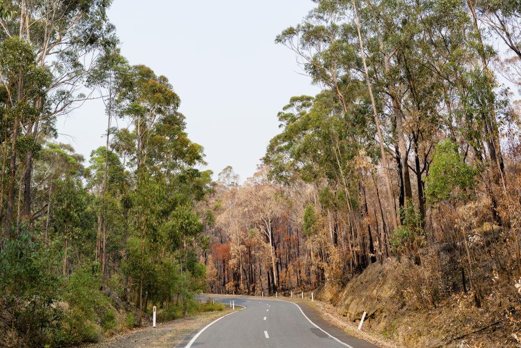 Domain Bushfires - East Gippsland