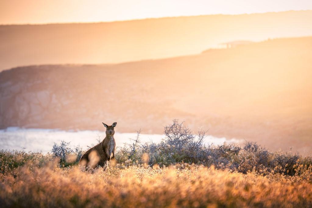 Domain Bushfires - Kangaroo Island