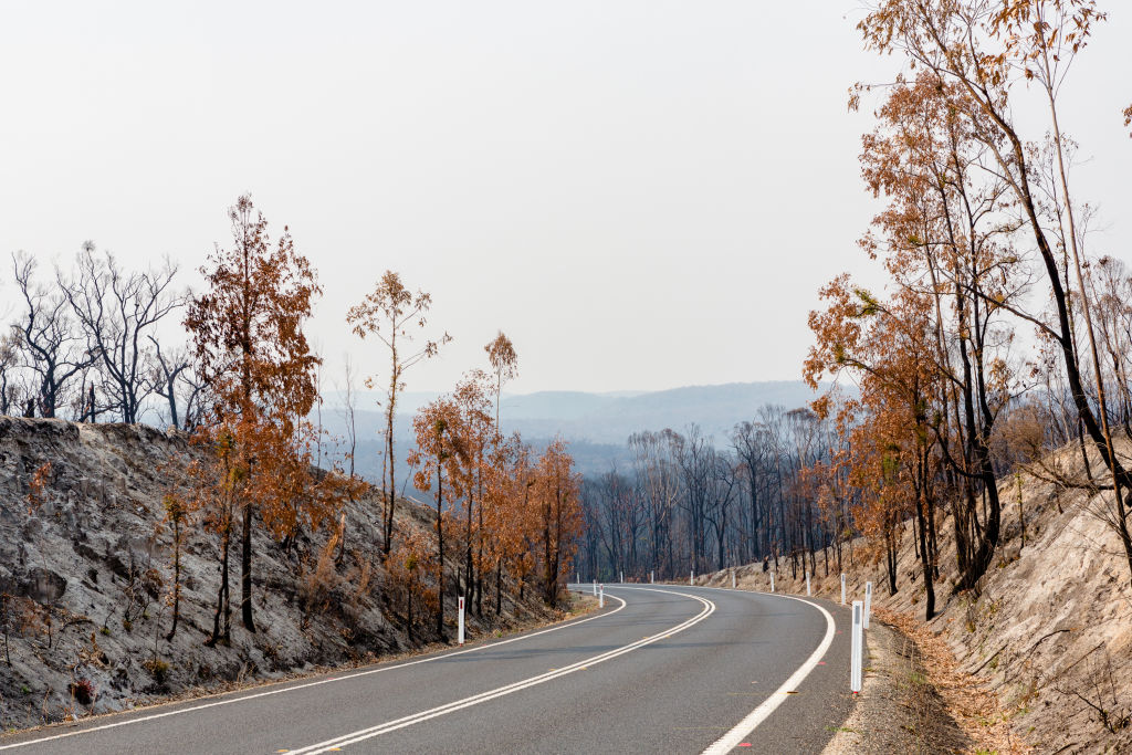 Domain_Bushfires_East_Gippsland_Cann_River_04_oacpor