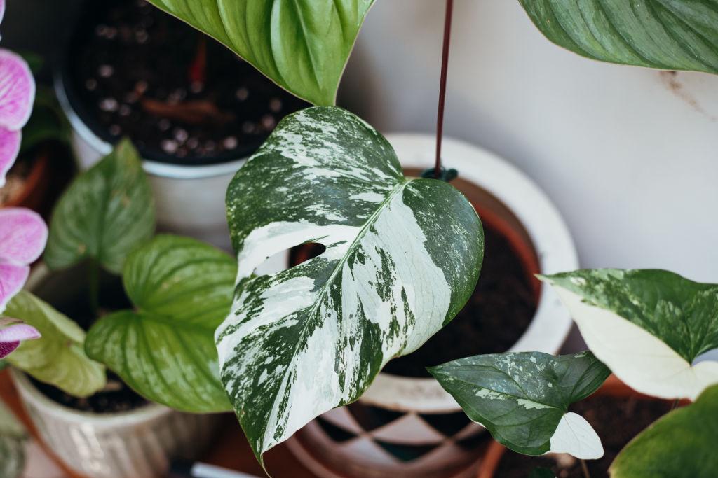 IndoorPlant-15_cbww1c