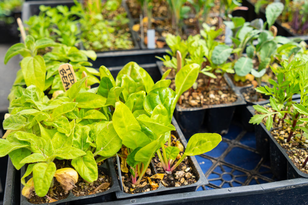 Seedlings are selling fast as many people look to start vegetable gardens while stuck at home.