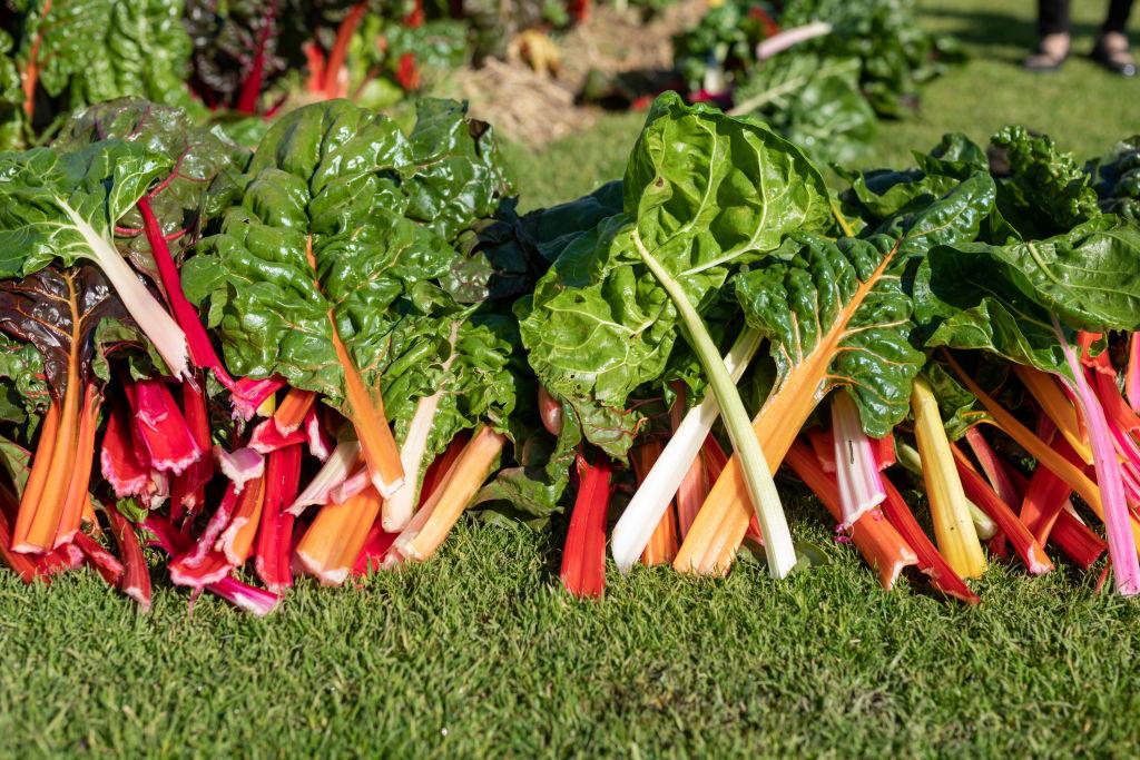 Domain_Werribee_Park_Gardeners_04_qd0nji