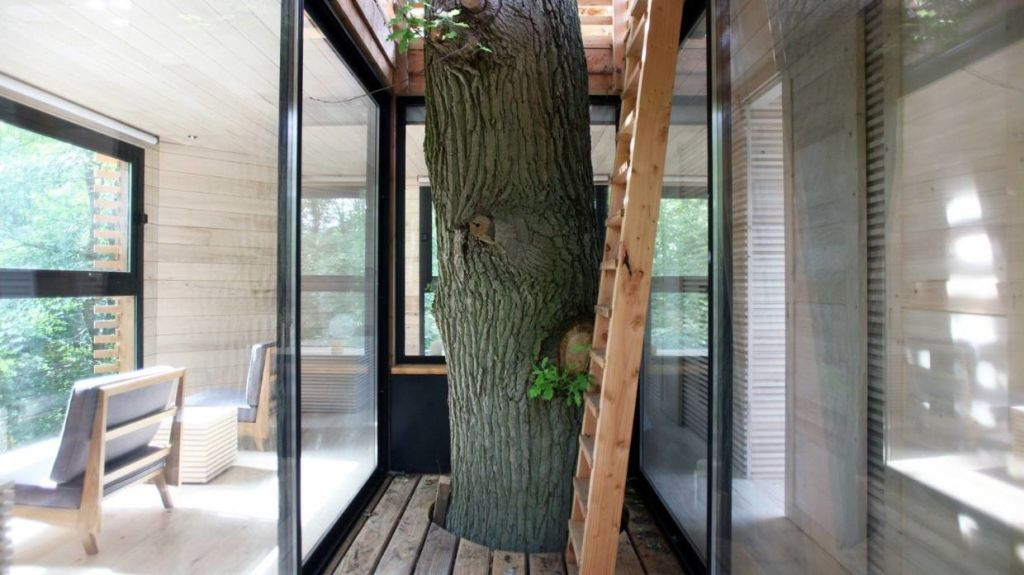 The trunk of the 100-year-old oak is a central feature. The ladder leads up to a private rooftop terrace.