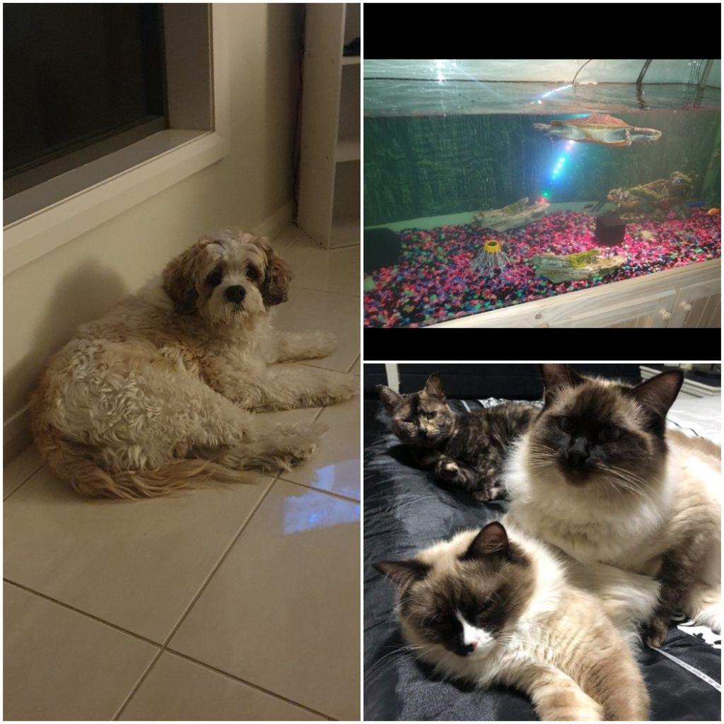 Tina Dimovska's pets