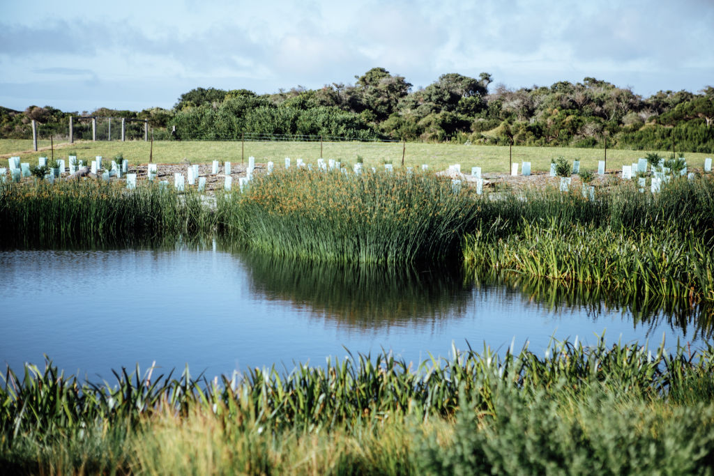 Restored_wetlands_at_The_Cape_-_photo_WIll_Hamilton_Coates_hhdhyn