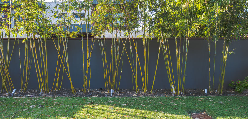 If planting bamboo, choose a clumping rather than running variety.