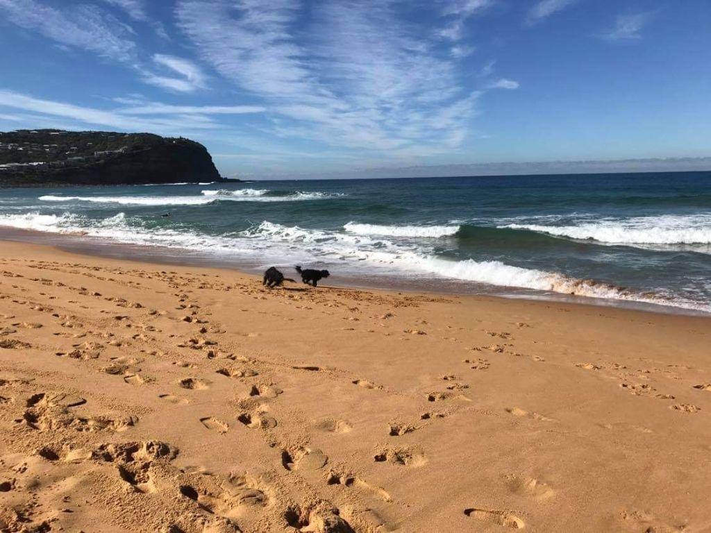 Dog_friendly_beaches_at_Copa_2_ilnejw
