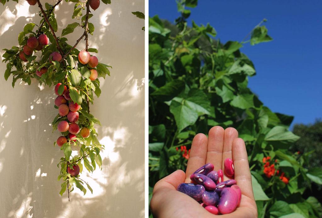 Belong Green Homes_Rachelle Van Diggele_Dandenong_Fruit
