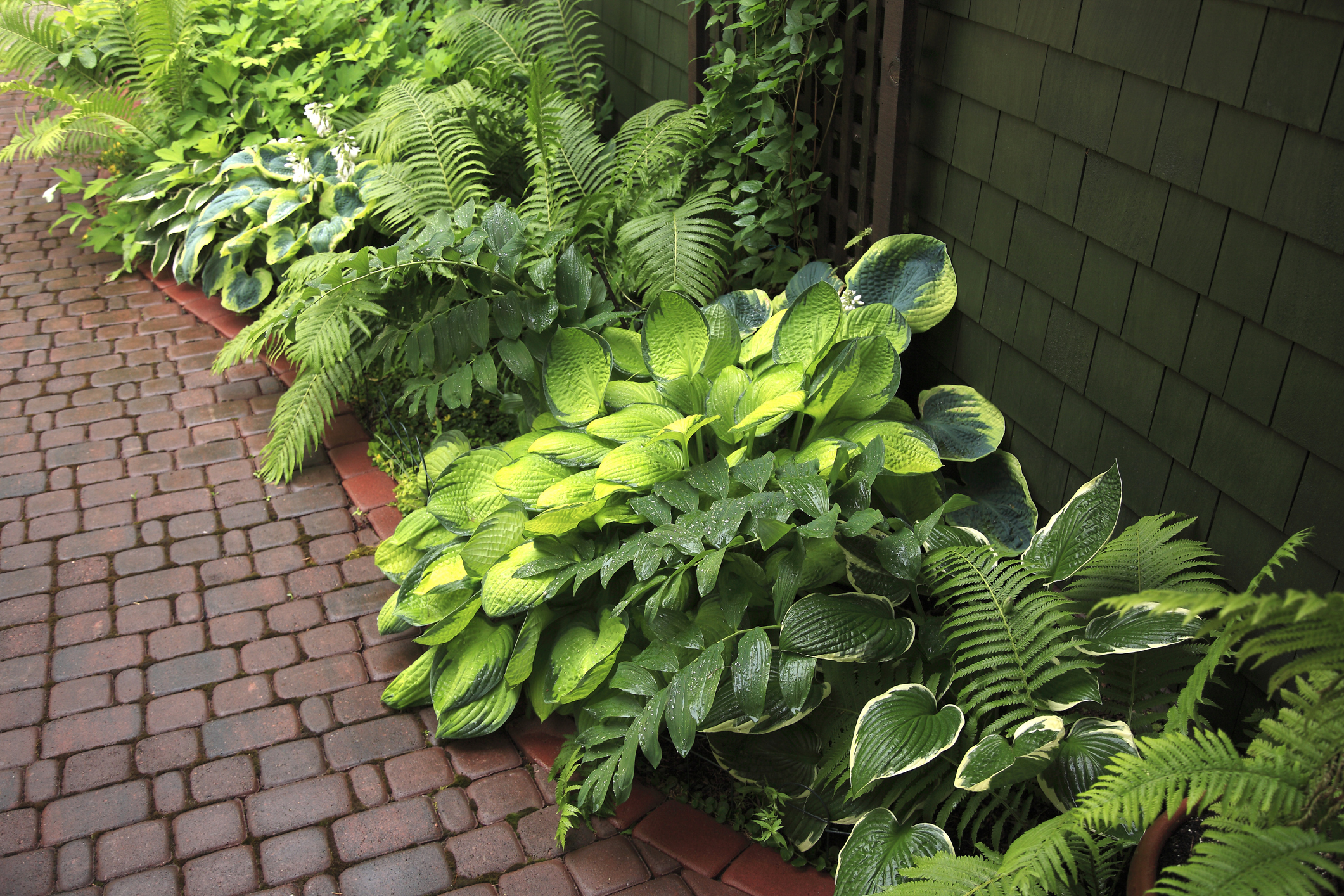Variegated hosta plants and lush leafy ferns can brighten up dark areas.